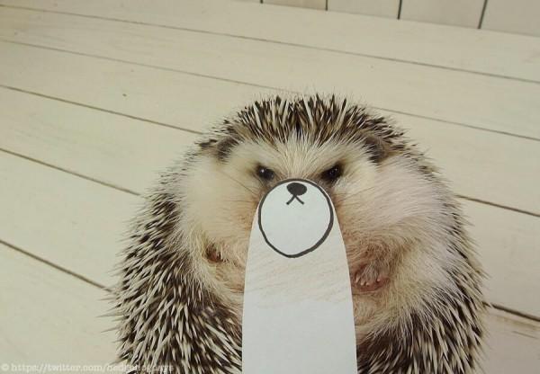 Marutaru the Japanese hedgehog superstar