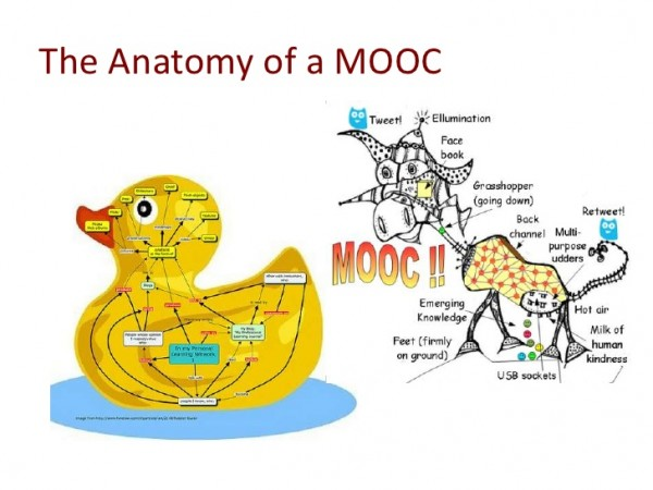 MOOC Cow and Duck